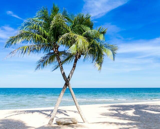 cocotier sur le plage